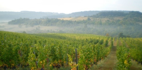 vinograd